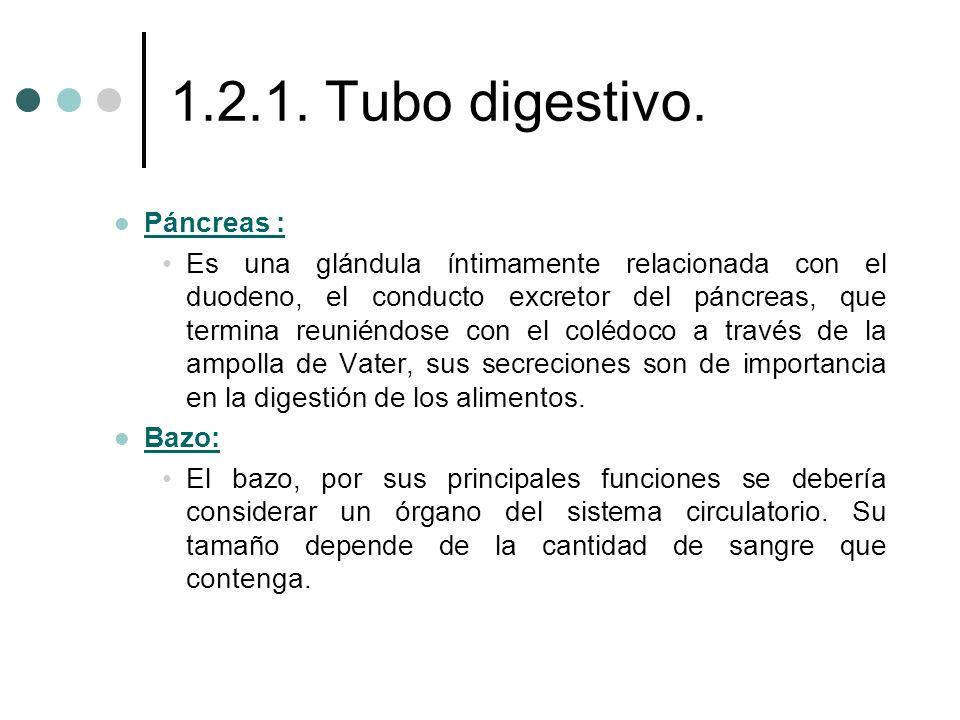1.2.1. Tubo digestivo. Páncreas :