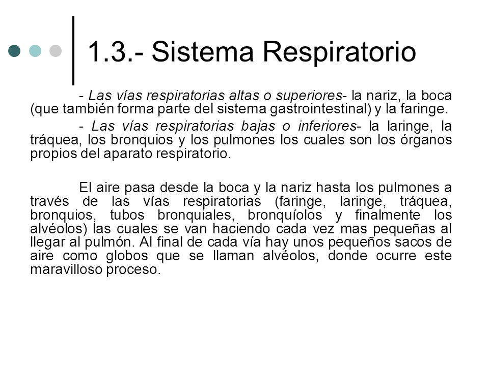 1.3.- Sistema Respiratorio