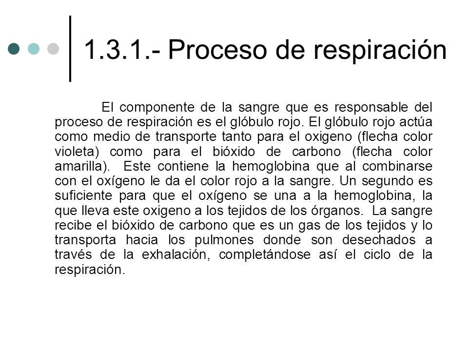 1.3.1.- Proceso de respiración