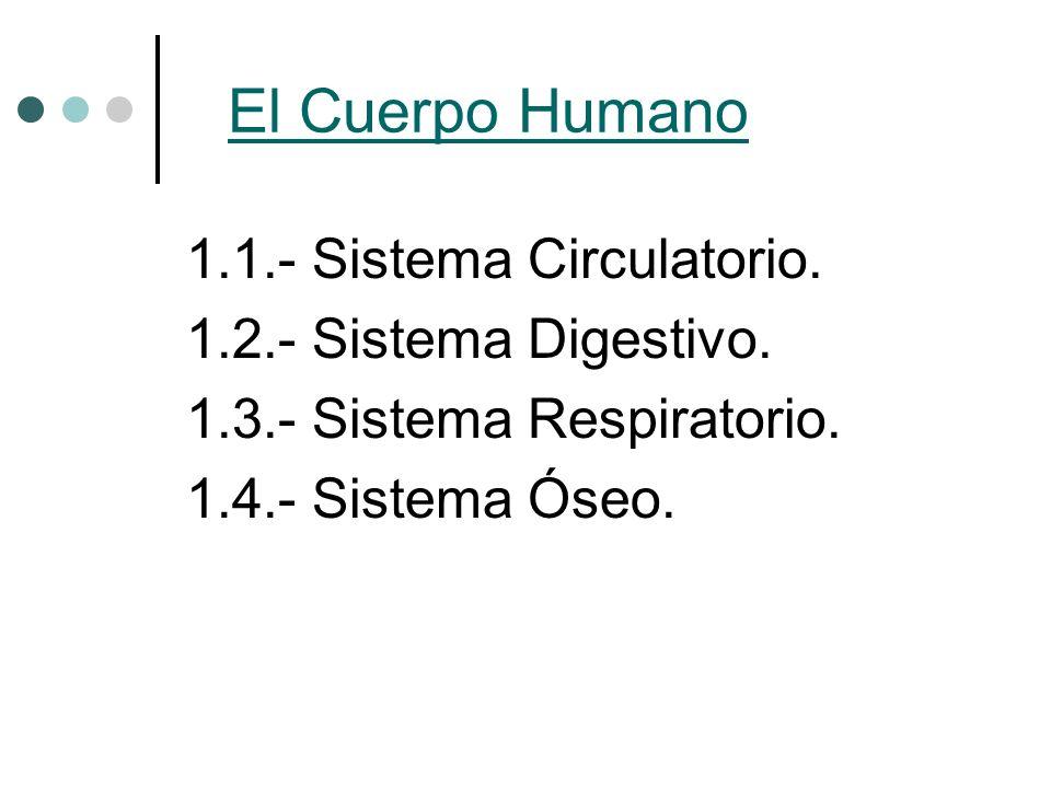 El Cuerpo Humano 1.1.- Sistema Circulatorio. 1.2.- Sistema Digestivo.