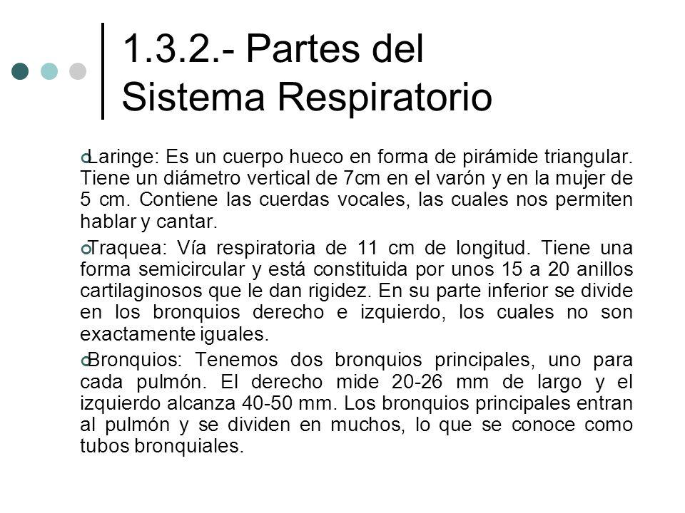 1.3.2.- Partes del Sistema Respiratorio