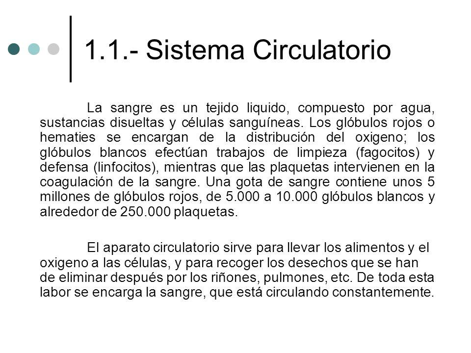 1.1.- Sistema Circulatorio