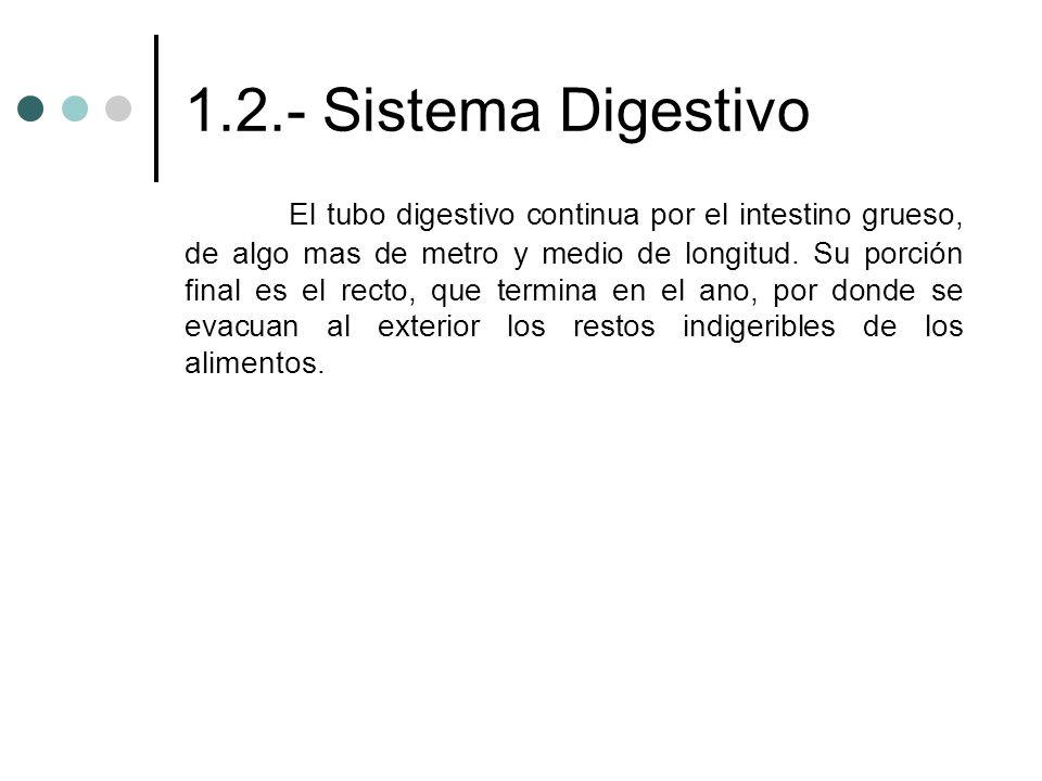 1.2.- Sistema Digestivo