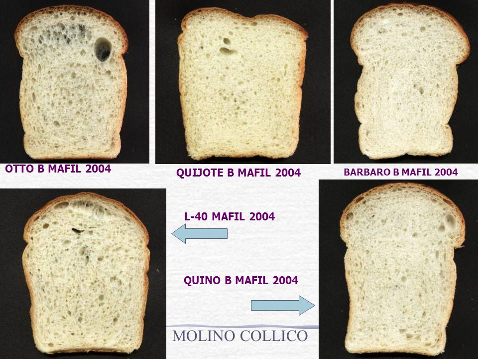 MOLINO COLLICO OTTO B MAFIL 2004 QUIJOTE B MAFIL 2004 L-40 MAFIL 2004