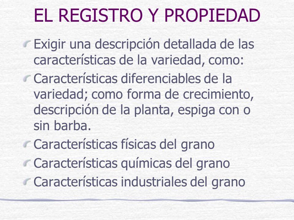 EL REGISTRO Y PROPIEDAD