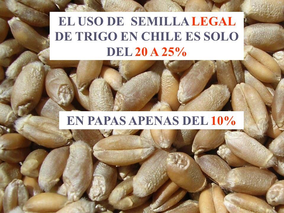 EL USO DE SEMILLA LEGAL DE TRIGO EN CHILE ES SOLO DEL 20 A 25%