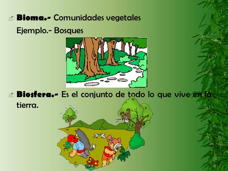 Bioma.- Comunidades vegetales