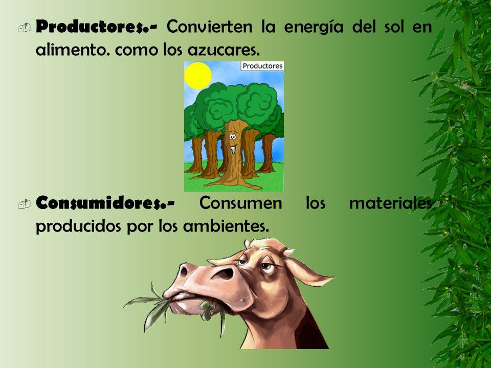Productores. - Convierten la energía del sol en alimento