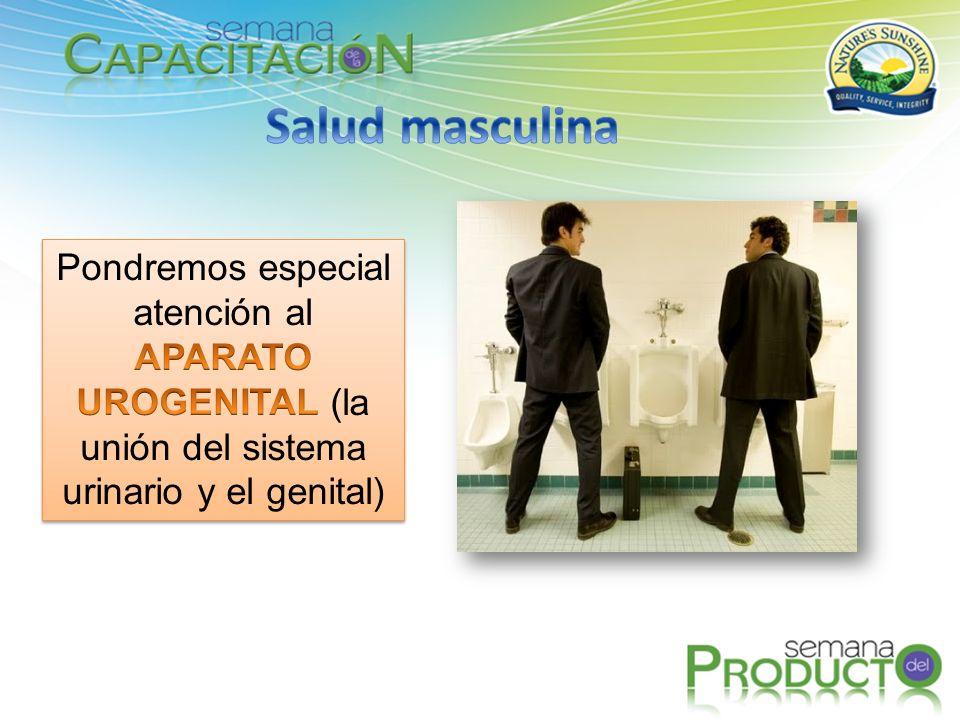 Salud masculina Pondremos especial atención al APARATO UROGENITAL (la unión del sistema urinario y el genital)