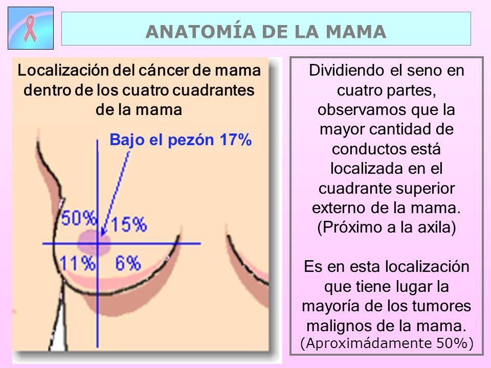 ANATOMÍA DE LA MAMA Localización del cáncer de mama dentro de los cuatro cuadrantes de la mama. Bajo el pezón 17%