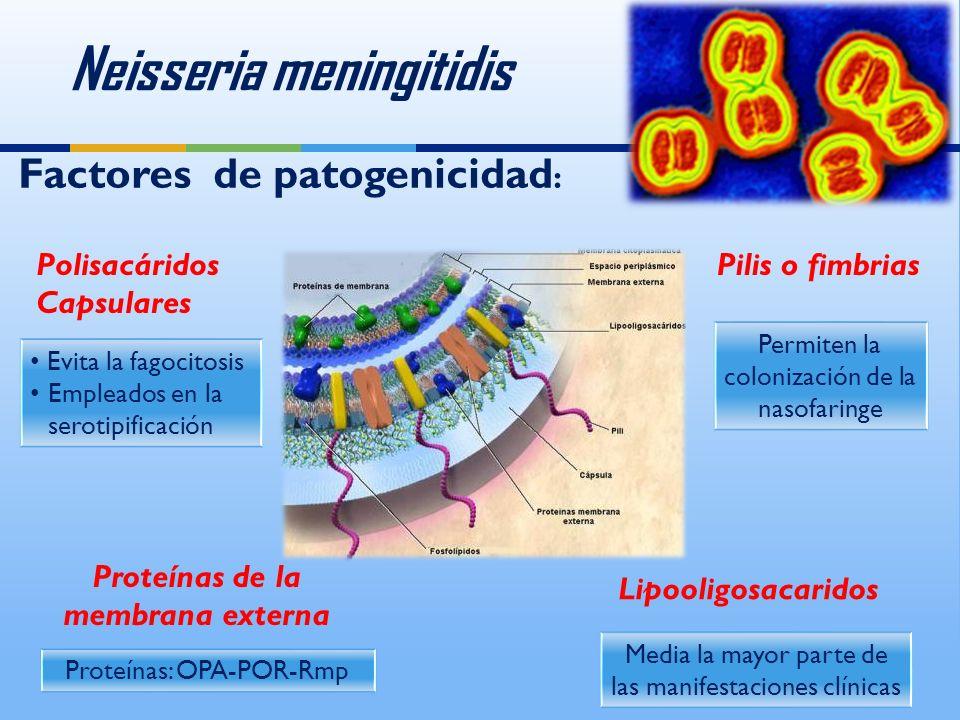 Neisseria meningitidis Proteínas de la membrana externa