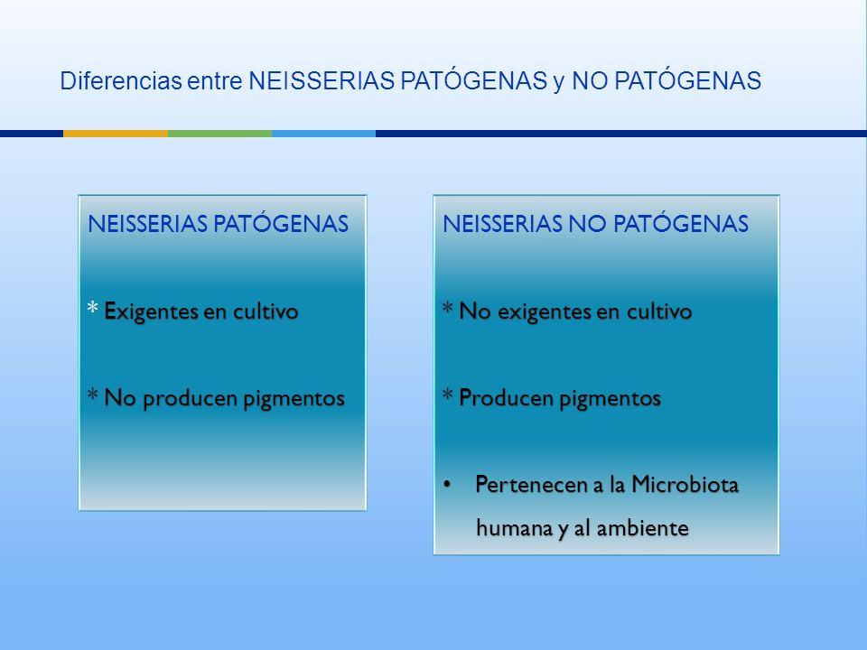 Diferencias entre NEISSERIAS PATÓGENAS y NO PATÓGENAS