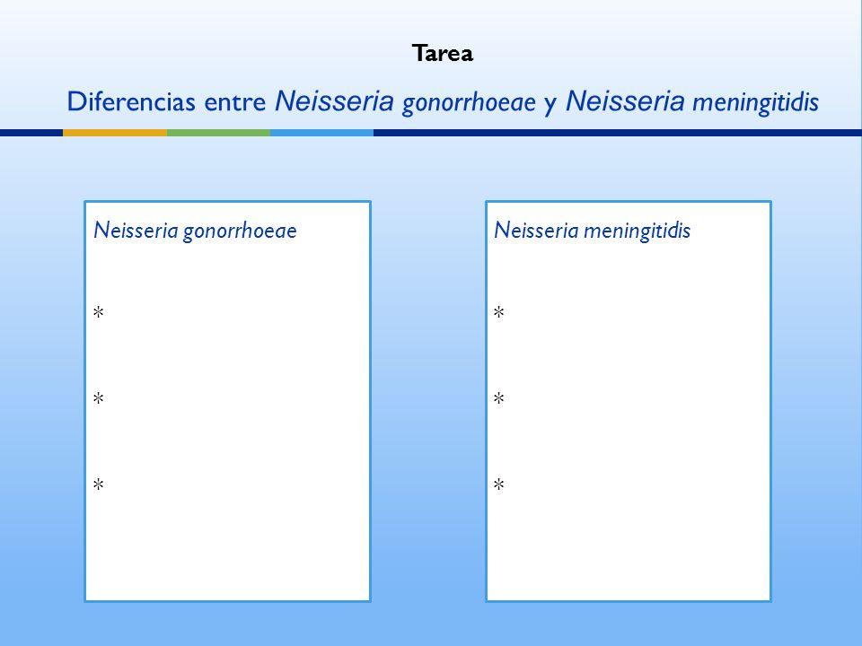 Diferencias entre Neisseria gonorrhoeae y Neisseria meningitidis