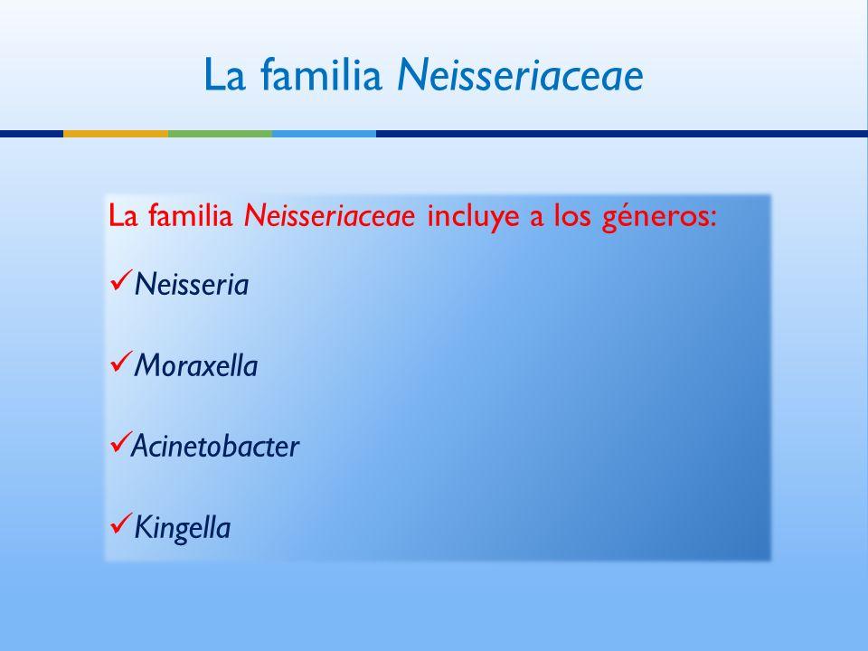 La familia Neisseriaceae