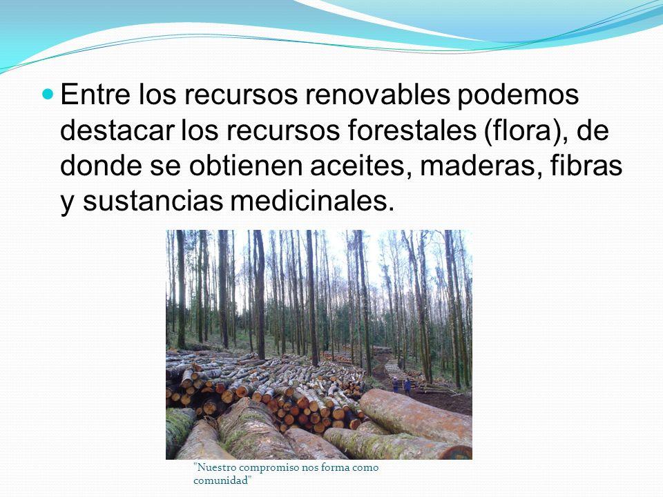 Entre los recursos renovables podemos destacar los recursos forestales (flora), de donde se obtienen aceites, maderas, fibras y sustancias medicinales.