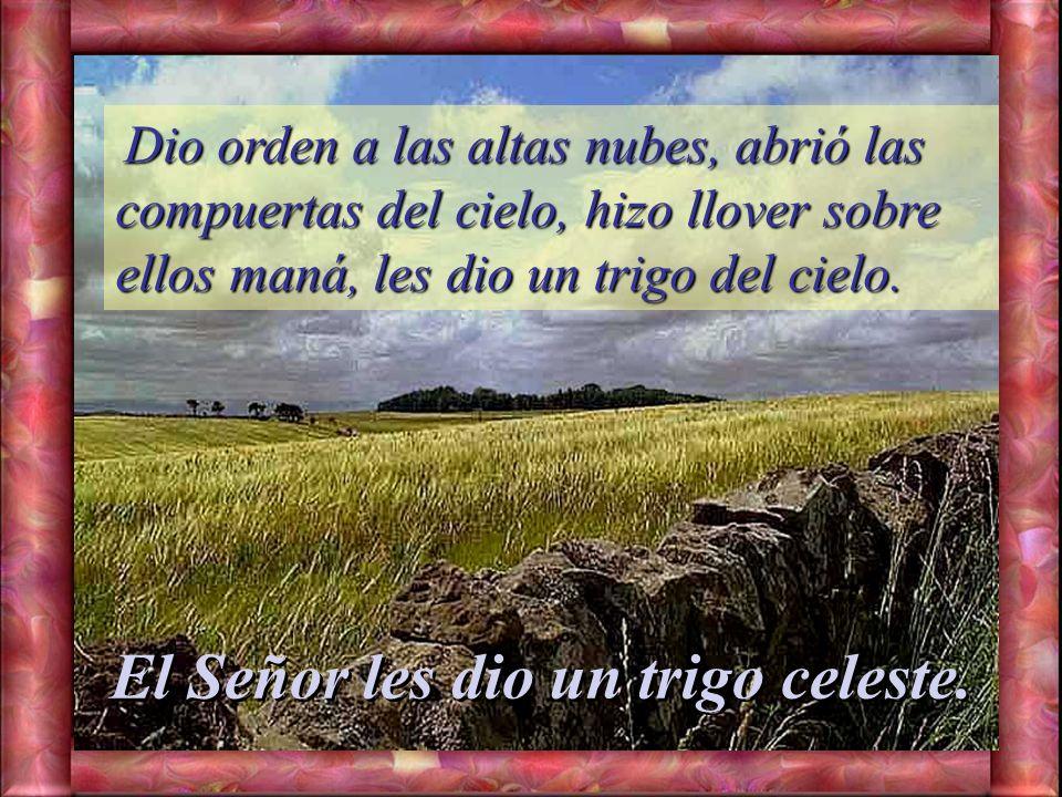 El Señor les dio un trigo celeste.