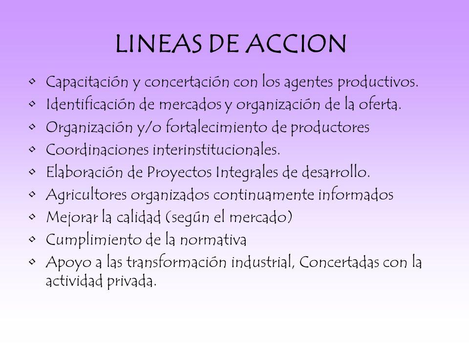 LINEAS DE ACCION Capacitación y concertación con los agentes productivos. Identificación de mercados y organización de la oferta.