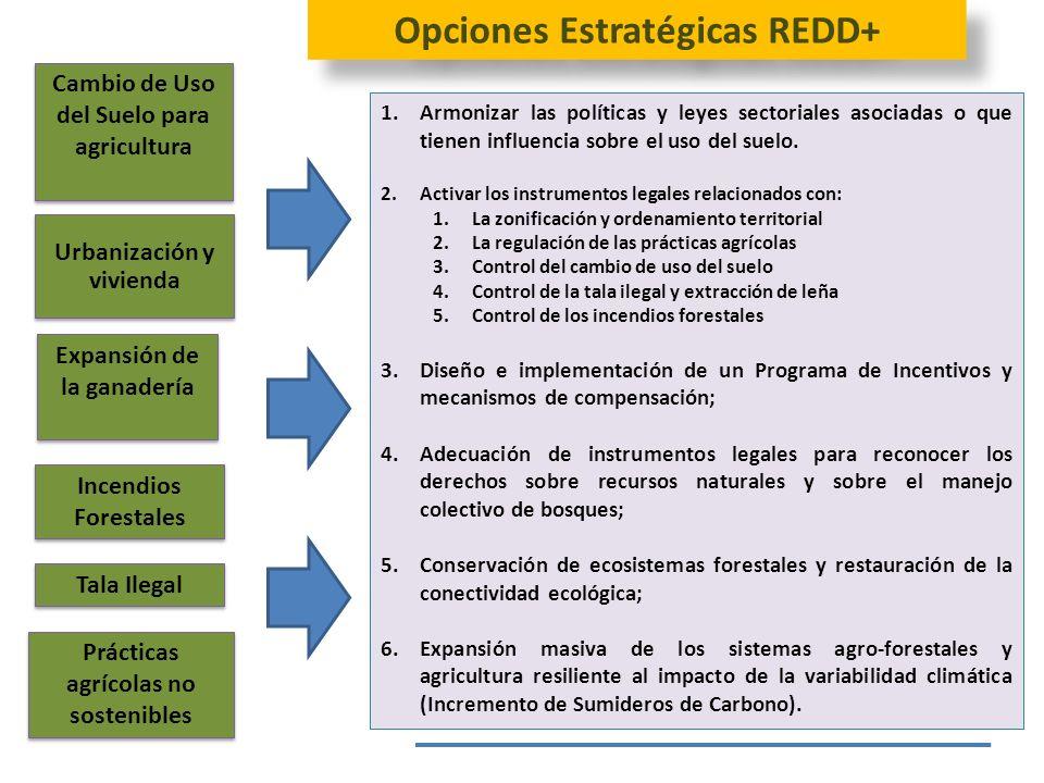 Opciones Estratégicas REDD+