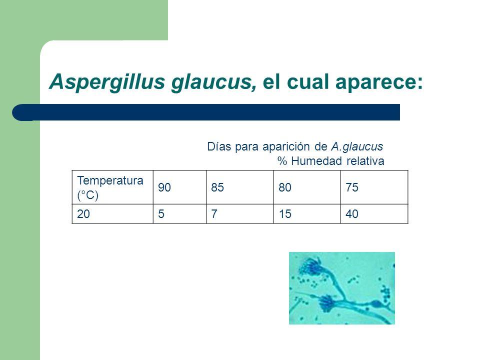Aspergillus glaucus, el cual aparece: