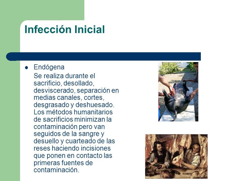 Infección Inicial Endógena