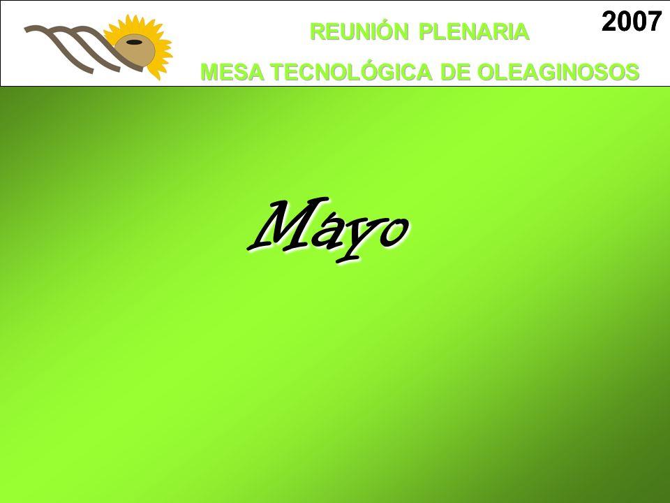 2007 2007 Mayo