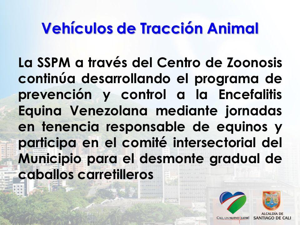 Vehículos de Tracción Animal