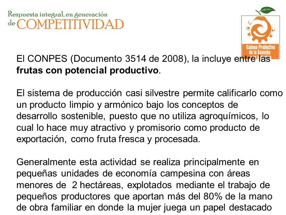 El CONPES (Documento 3514 de 2008), la incluye entre las frutas con potencial productivo.