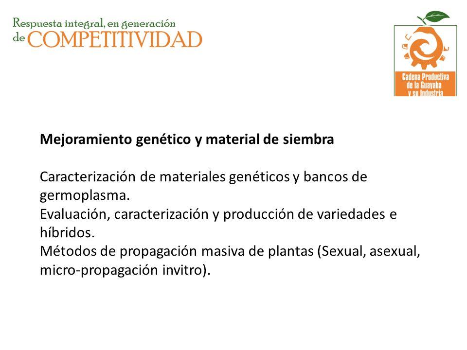 Mejoramiento genético y material de siembra Caracterización de materiales genéticos y bancos de germoplasma.