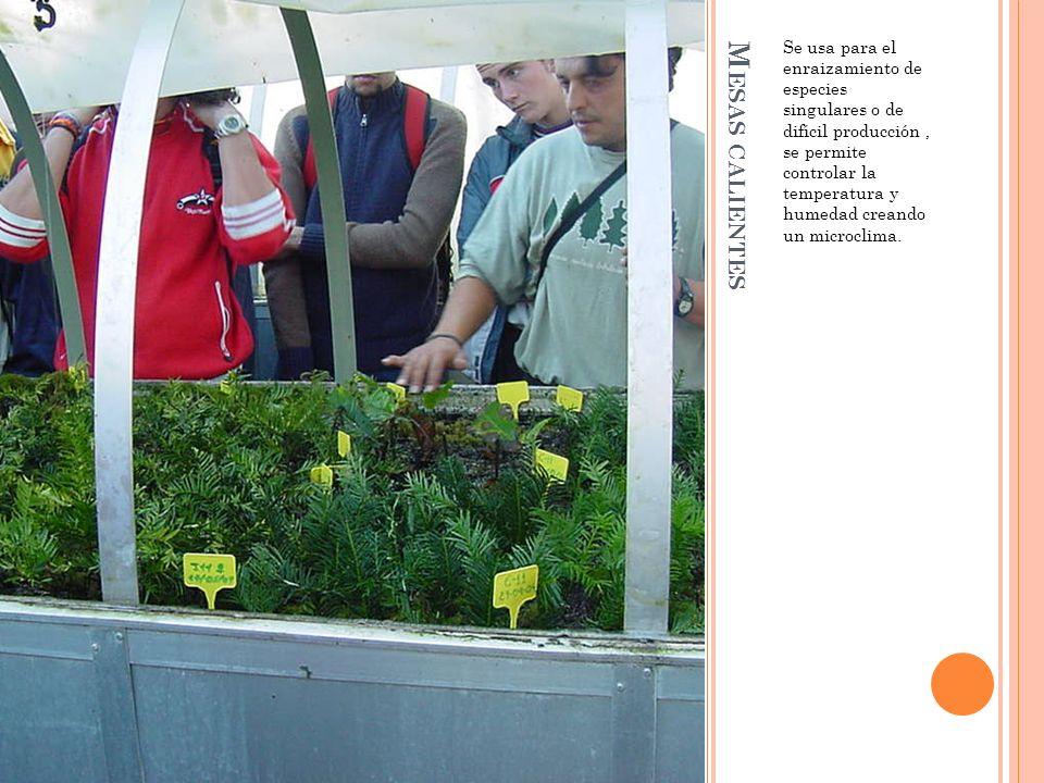 Se usa para el enraizamiento de especies singulares o de difícil producción , se permite controlar la temperatura y humedad creando un microclima.