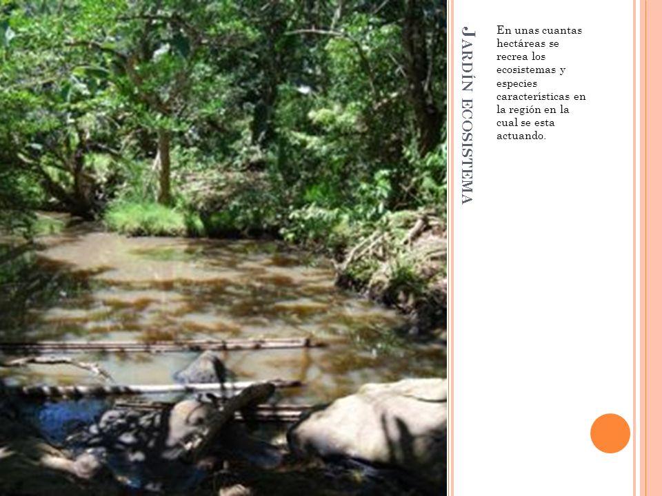 En unas cuantas hectáreas se recrea los ecosistemas y especies características en la región en la cual se esta actuando.