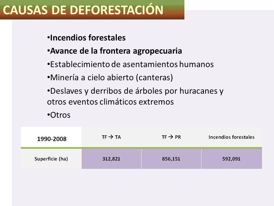CAUSAS DE DEFORESTACIÓN