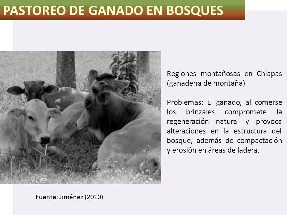 PASTOREO DE GANADO EN BOSQUES
