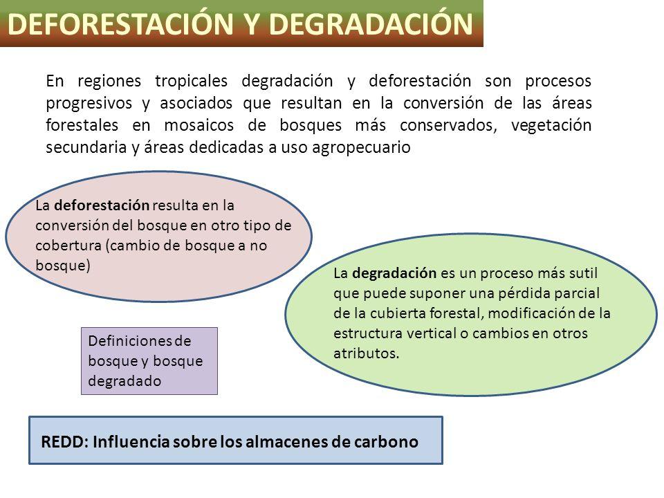DEFORESTACIÓN Y DEGRADACIÓN