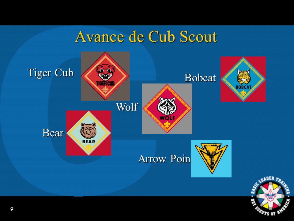 Avance de Cub Scout Tiger Cub Bobcat Wolf Bear Arrow Points