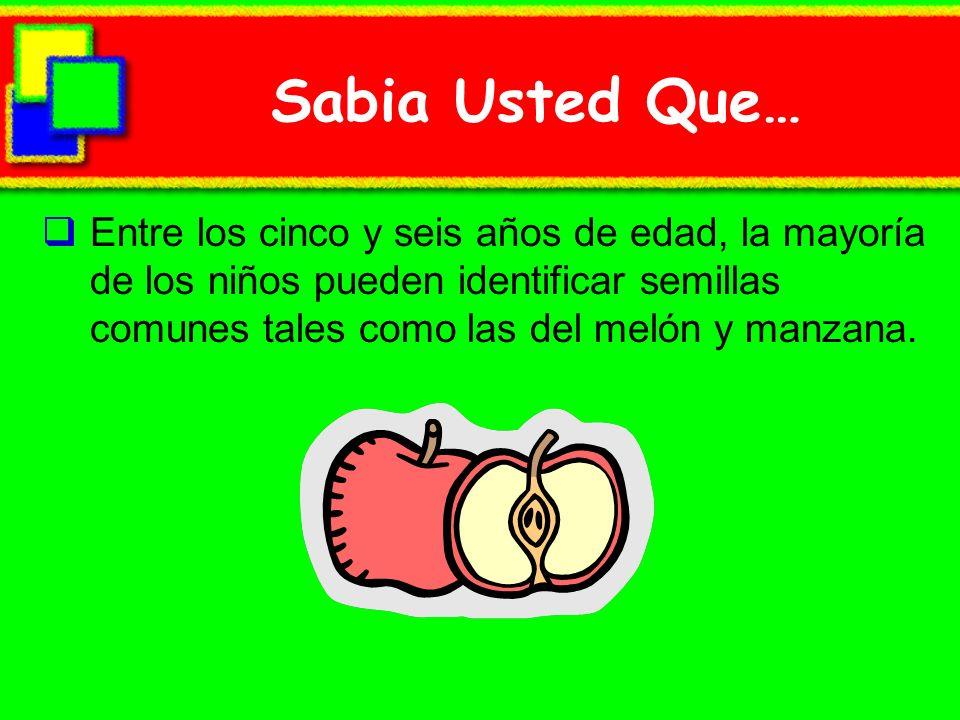 Sabia Usted Que… Entre los cinco y seis años de edad, la mayoría de los niños pueden identificar semillas comunes tales como las del melón y manzana.