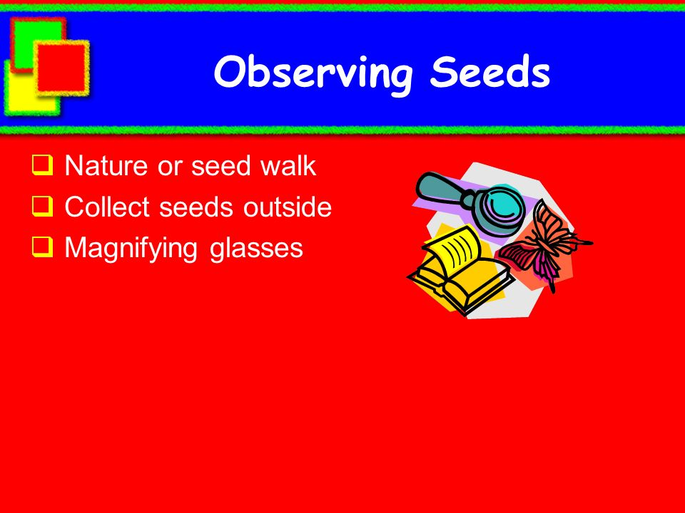Observing Seeds Nature or seed walk Collect seeds outside