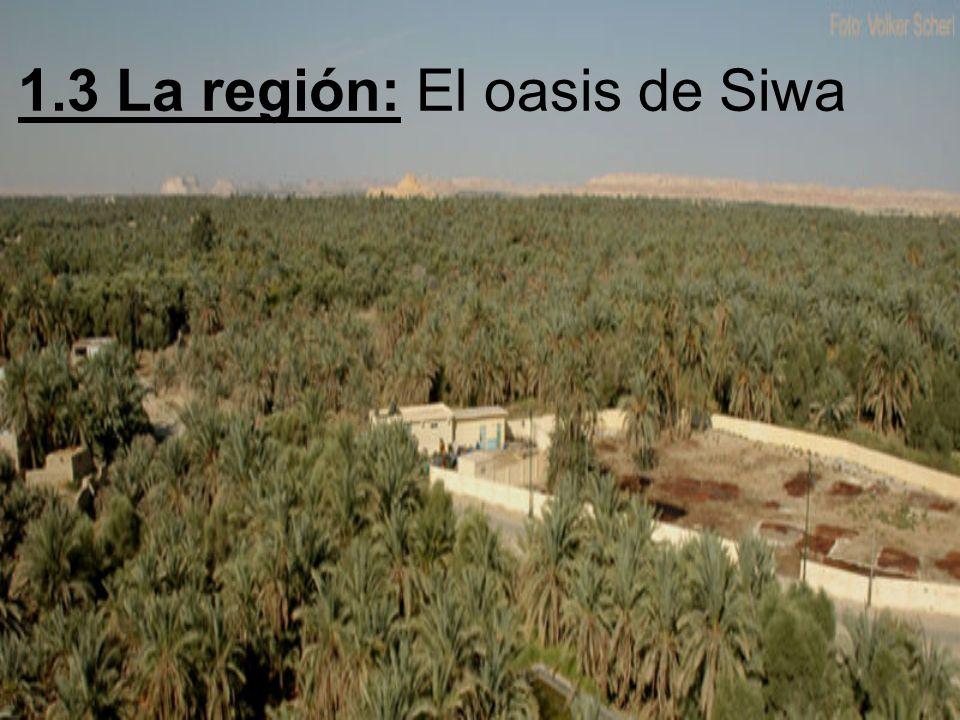 1.3 La región: El oasis de Siwa