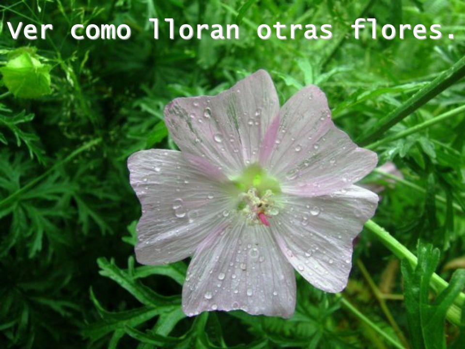 Ver como lloran otras flores.