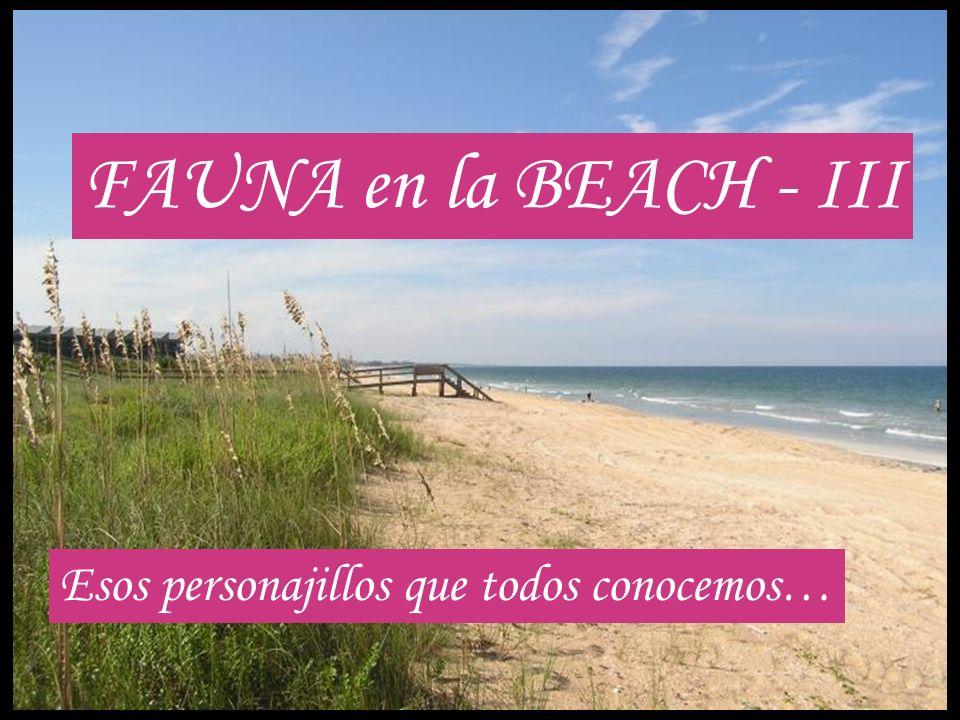 FAUNA en la BEACH - III Esos personajillos que todos conocemos…