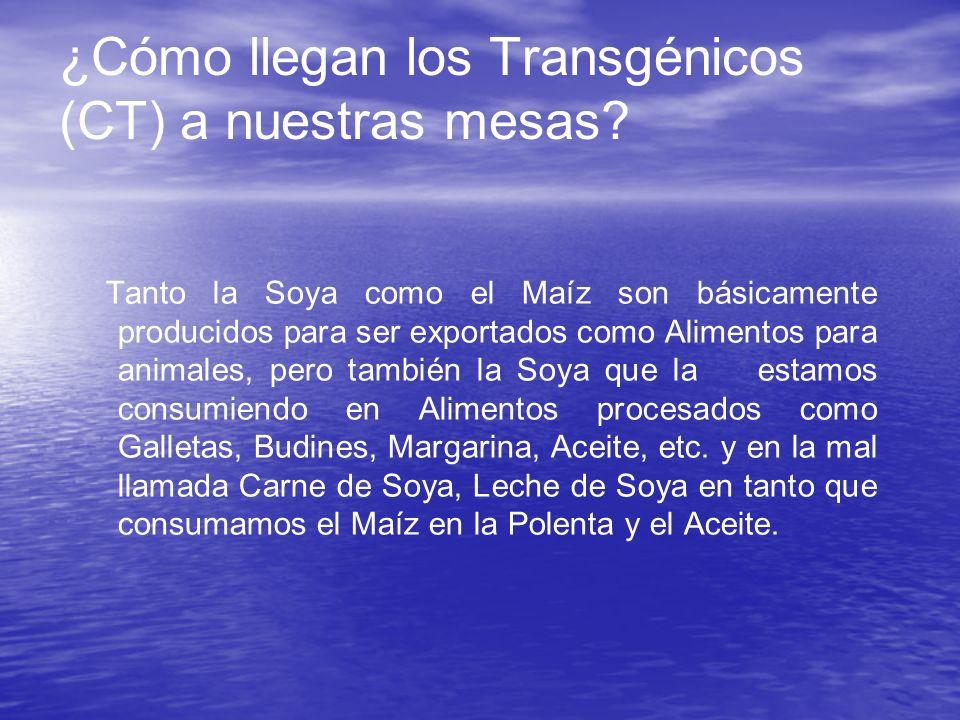 ¿Cómo llegan los Transgénicos (CT) a nuestras mesas