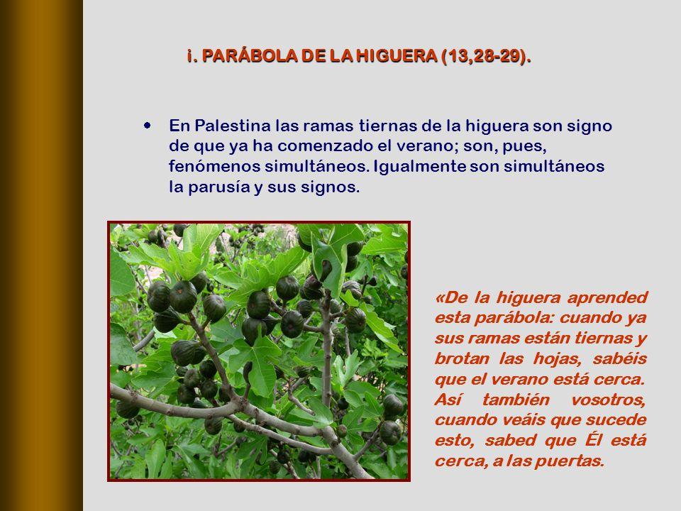 i. PARÁBOLA DE LA HIGUERA (13,28‑29).
