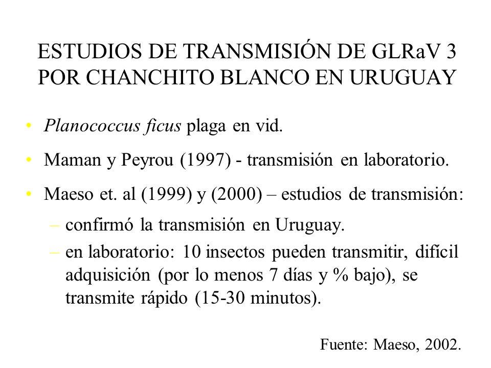 ESTUDIOS DE TRANSMISIÓN DE GLRaV 3 POR CHANCHITO BLANCO EN URUGUAY