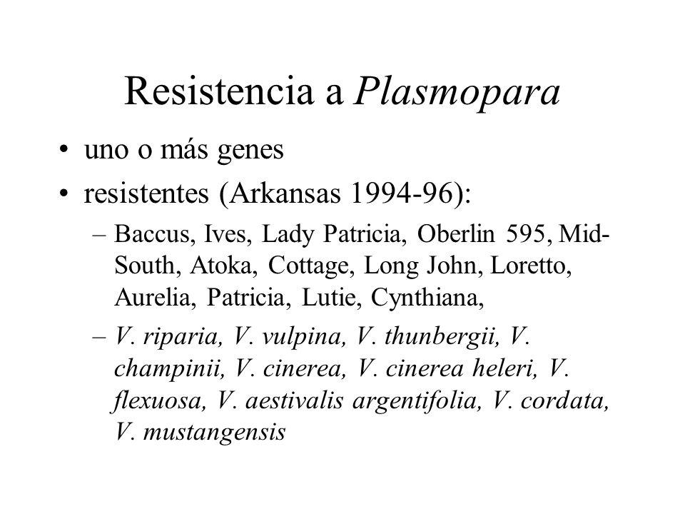 Resistencia a Plasmopara