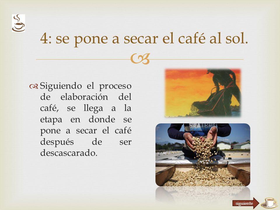 4: se pone a secar el café al sol.