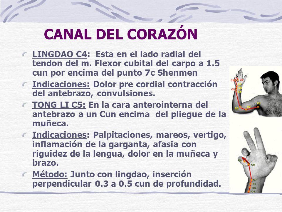 CANAL DEL CORAZÓN LINGDAO C4: Esta en el lado radial del tendon del m. Flexor cubital del carpo a 1.5 cun por encima del punto 7c Shenmen.