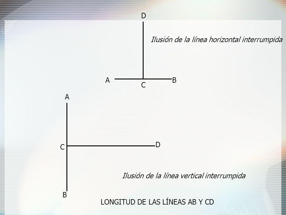 D Ilusión de la línea horizontal interrumpida. A. B. C. A. D. C. Ilusión de la línea vertical interrumpida.