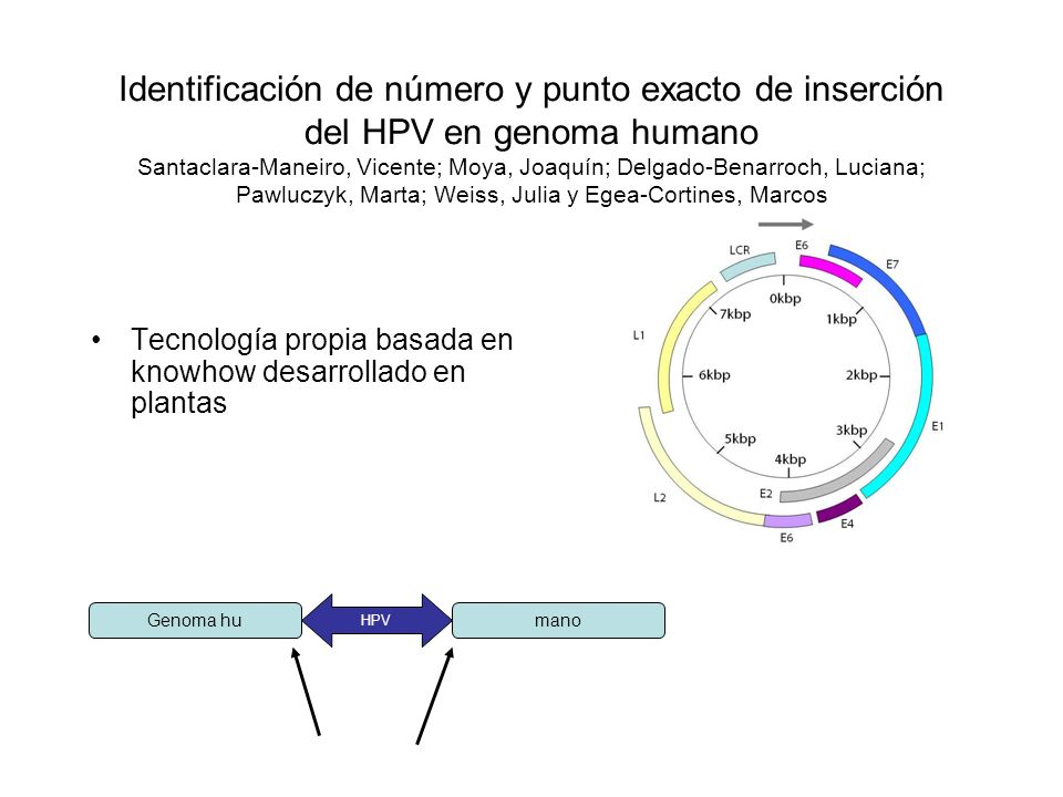 Identificación de número y punto exacto de inserción del HPV en genoma humano Santaclara-Maneiro, Vicente; Moya, Joaquín; Delgado-Benarroch, Luciana; Pawluczyk, Marta; Weiss, Julia y Egea-Cortines, Marcos
