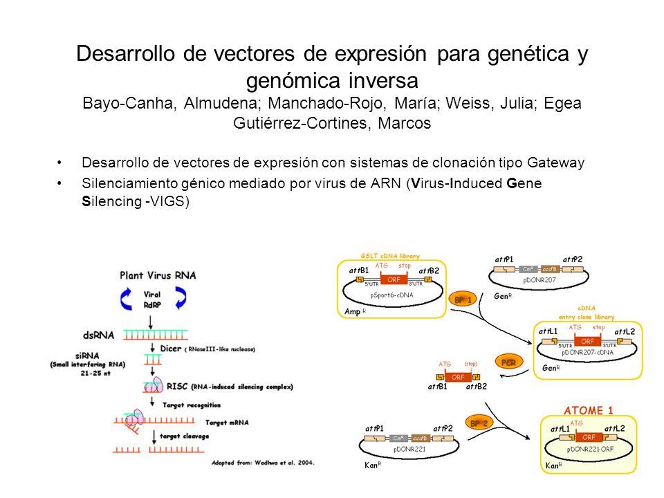 Desarrollo de vectores de expresión para genética y genómica inversa Bayo-Canha, Almudena; Manchado-Rojo, María; Weiss, Julia; Egea Gutiérrez-Cortines, Marcos