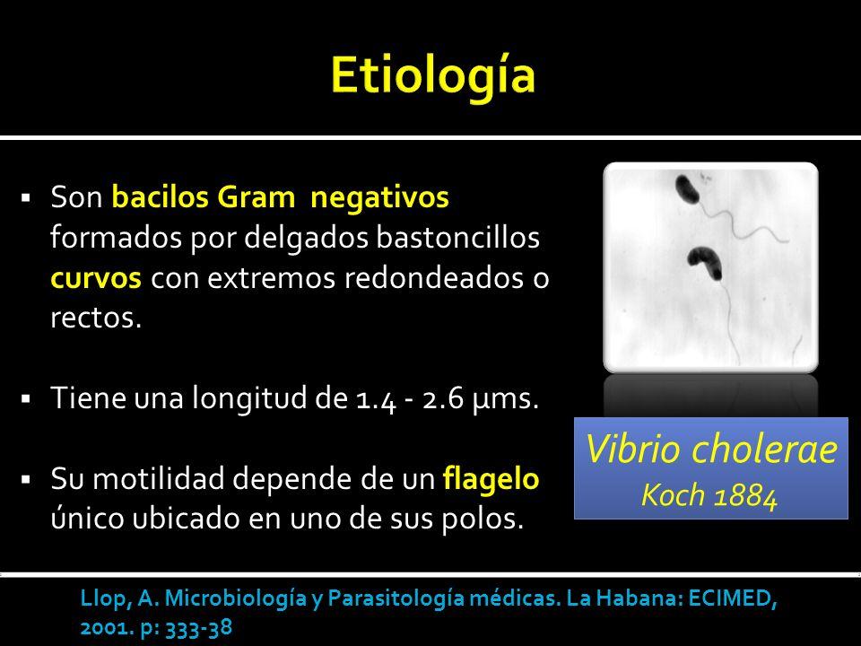 Etiología Vibrio cholerae