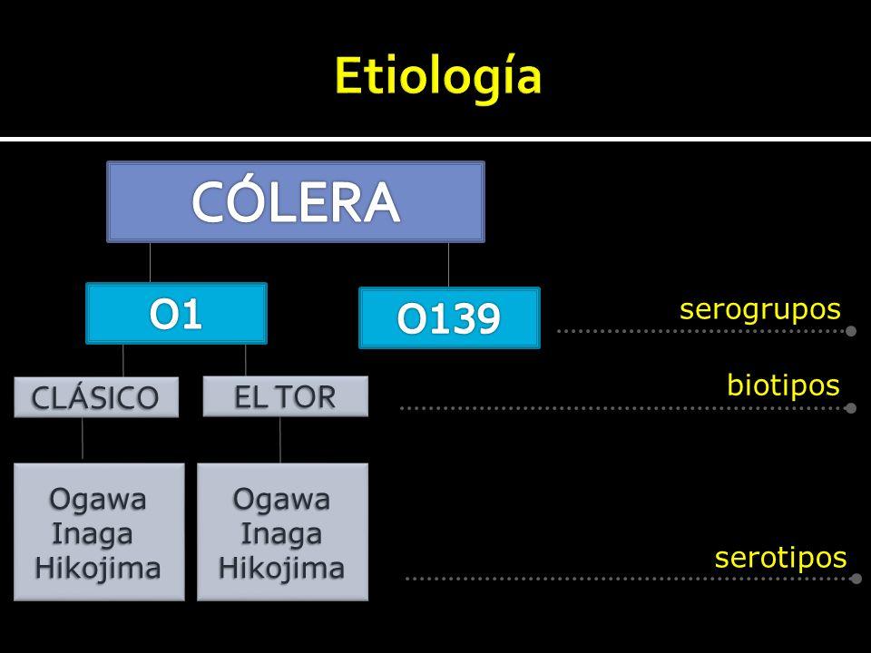 CÓLERA Etiología O1 O139 CLÁSICO EL TOR serogrupos biotipos Ogawa